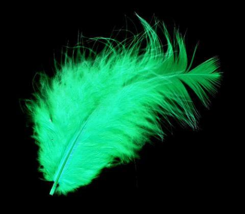 Alien feather / image courtesy of TheAlieness GiselaGiardino²³ @ flickr